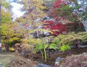 旧岩船氏庭園4