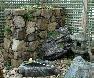 【石積み】宮崎県都農山石の野面積み、天端はコケや草花で薄層緑化しています。