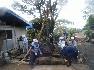 【9】チェーンブロックをつけて、庭石や樹木の運搬