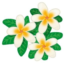 flower_plumeria